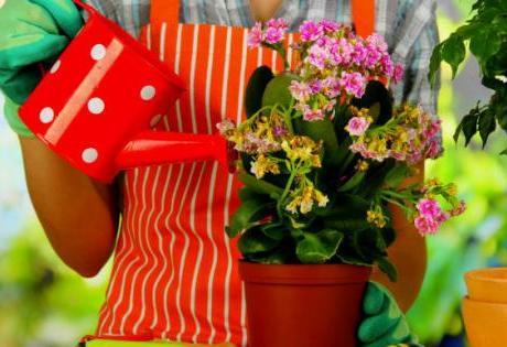 Confira Algumas Dicas para Cuidar das Plantas na Primavera